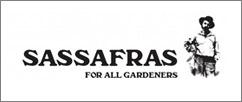 SASSAFRAS,ササフラス